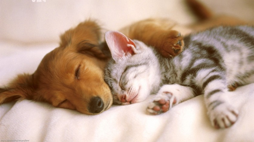 Backgrounds-Images-Cats-And-Dogs-e1383045695126